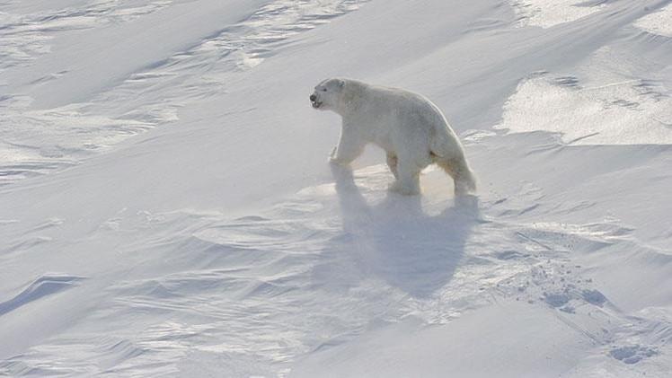 Rusia y Dinamarca negociarán bilateralmente sus límites en la plataforma del Ártico