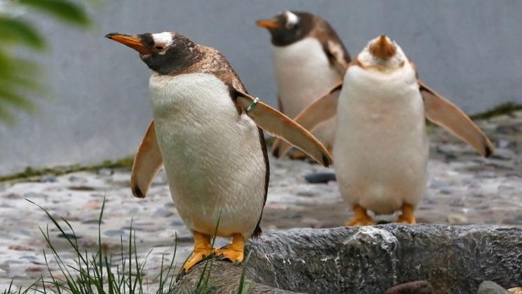 Turistas podrían causar un desastre ecológico en la Antártida