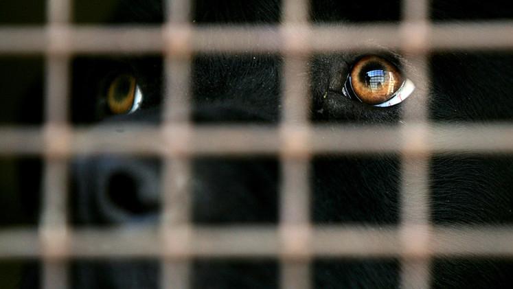 FUERTES IMÁGENES: Revelan escalofriante sacrificio de perros en China