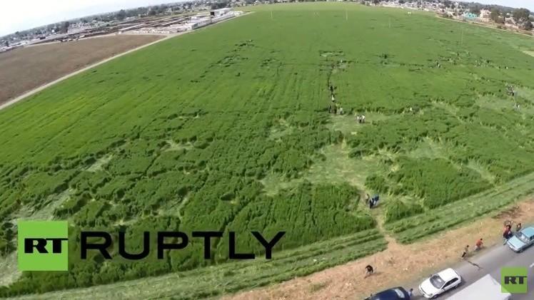 VIDEO: Aparecen formas misteriosas en un campo de México