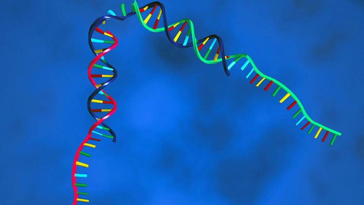 Maneras de mejorar los genes de nuestro organismo