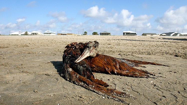 Muertes inexplicables de aves en el Pacífico de EE.UU. desconciertan a los científicos