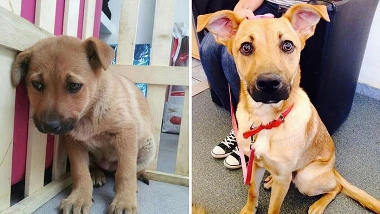 La vida de las mascotas antes y después de la adopción