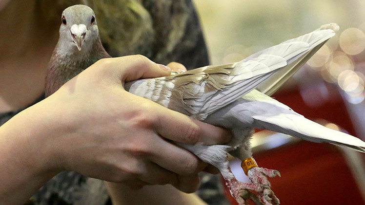 Revelan qué hacían en Vietnam las 'palomas espias' de China