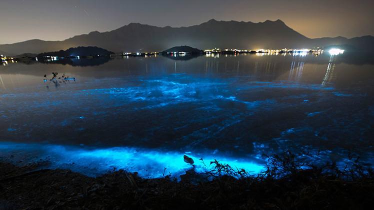 'Fantasma de mar': belleza y muerte en las aguas de Hong Kong
