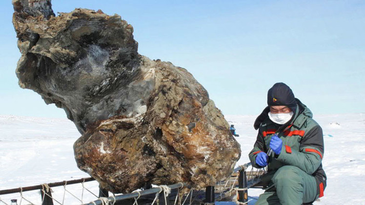 Al borde de un avance revolucionario: Esperan crear antibióticos a base de restos de mamut siberiano