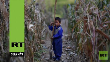 Niño norcoreano