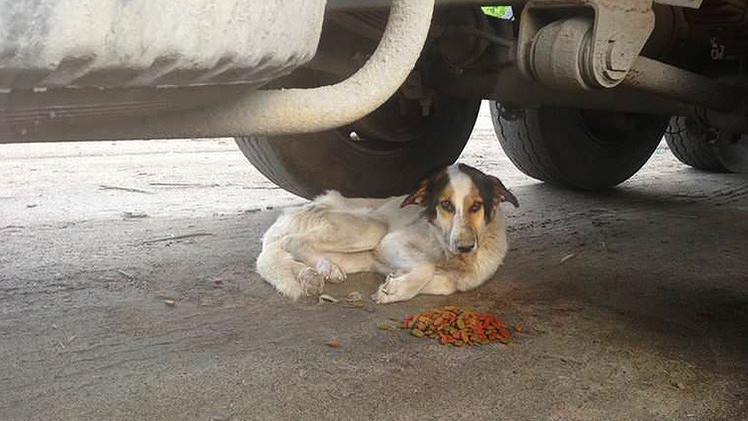 Fotos: Voluntarios en Rusia logran 'revivir' a un perro 'hachiko' abandonado