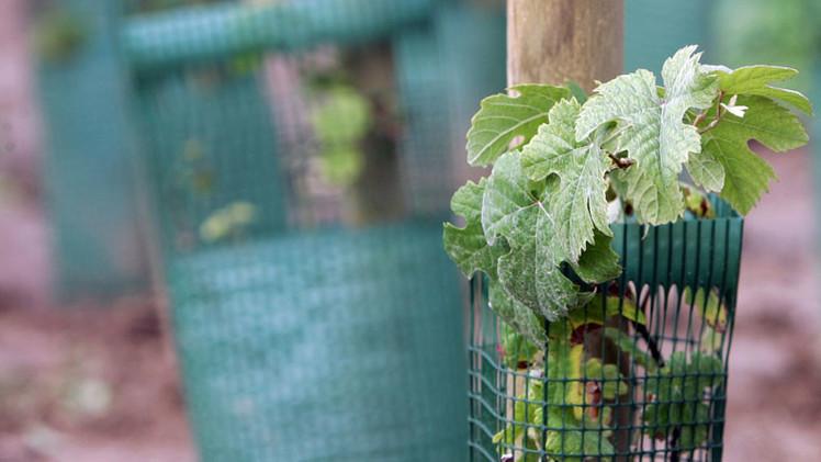 Nuevos cultivos transgénicos de Monsanto crean más problemas de los que resuelven