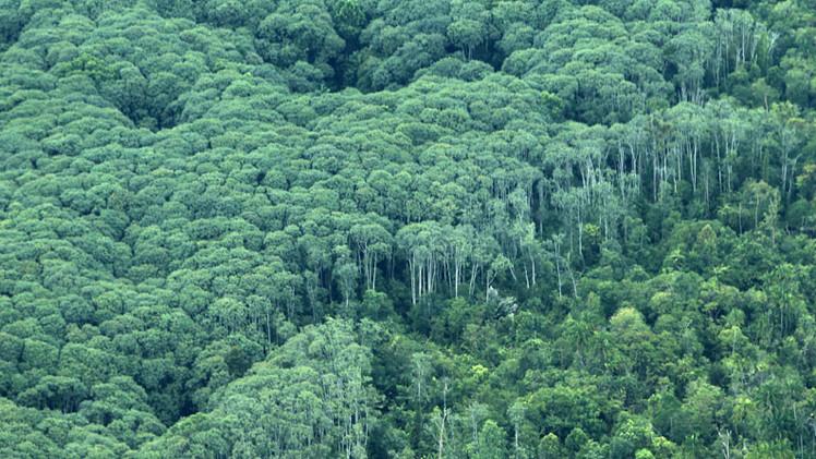 Calentamiento global: científicos encuentran la solución para salvar al planeta