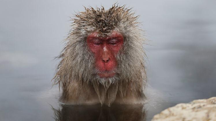 ¿Cómo pudieron llegar los monos a Sudamérica desde África?