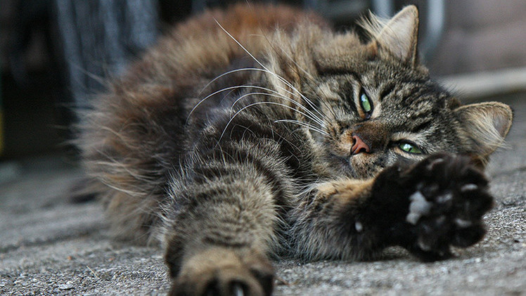 Estudio: Los gatos pueden ver 'lo invisible'