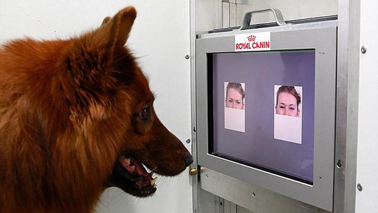 Estudio: ¿Saben los perros 'leer' las emociones de los humanos?