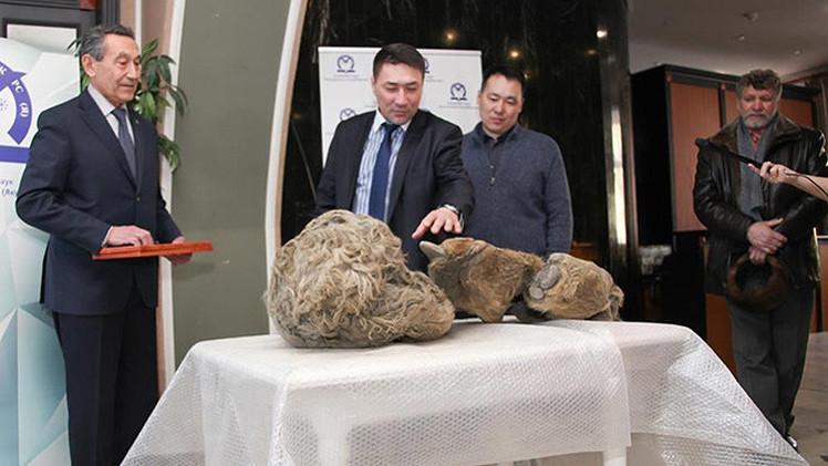 Video: Hallan por primera vez restos de una cría de rinoceronte lanudo en Siberia