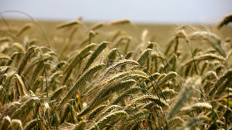 Monsanto compraría tierras ucranianas para sembrar transgénicos prohibidos en la UE