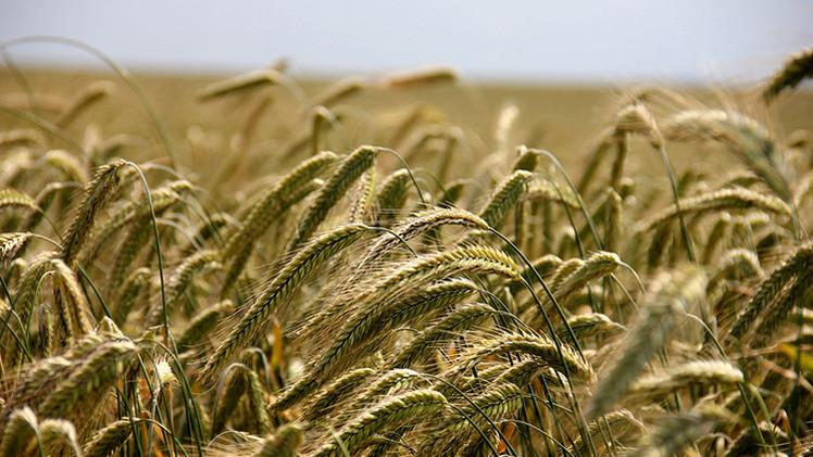 Monsanto estaría comprando tierras ucranianas para sembrar OGM prohibidos