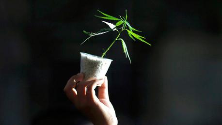 Confirmado: La marihuana es cien veces menos peligrosa para la salud que el alcohol