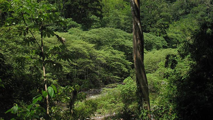 Encuentran una mítica urbe precolombina perdida en la selva hondureña