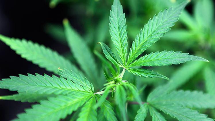 ¿Helado de marihuana?: La legalización trae consigo un nuevo mercado