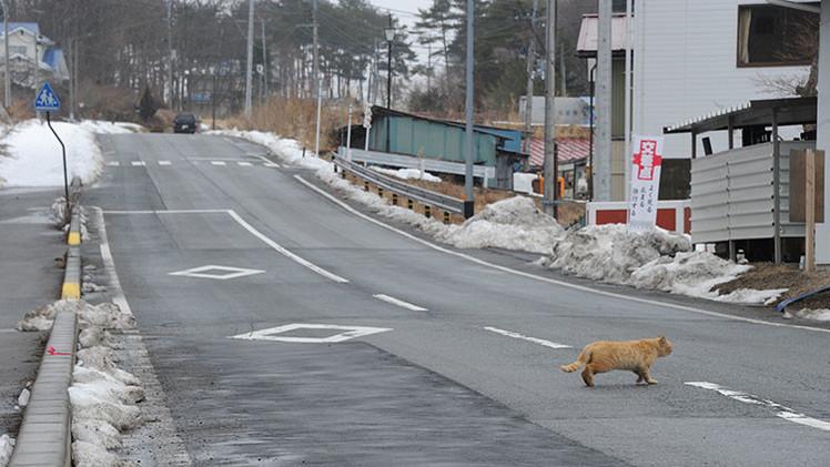 Fotos: Un paraíso, convertido en pueblo fantasma por la radiación de Fukushima