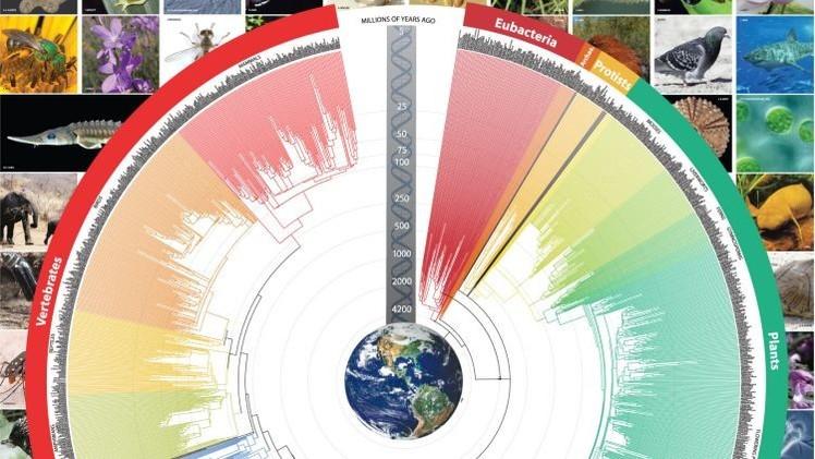 ¿Estaba Darwin equivocado? El 'árbol de la vida' arroja luz al proceso de evolución de las especies