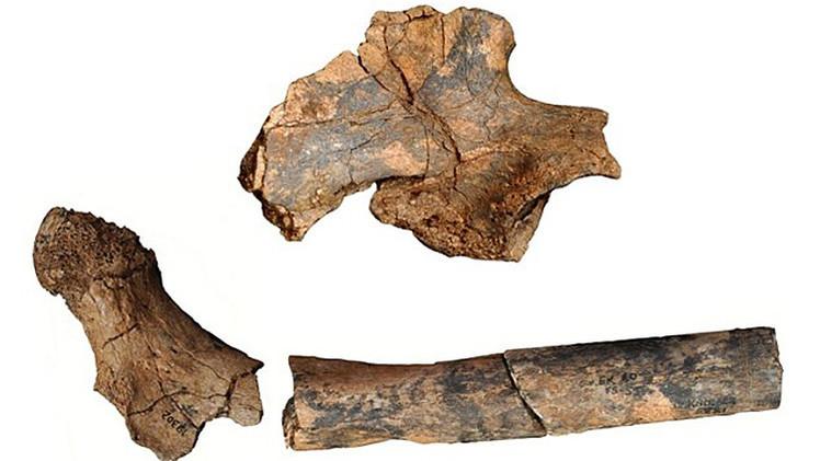 Hallan restos de ancestros humanos que revolucionan la teoría de la evolución