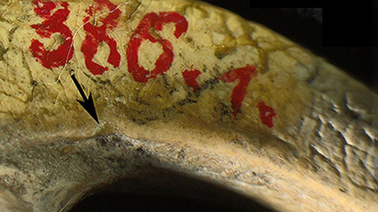 Científicos identifican joyas que serían las más antiguas del mundo