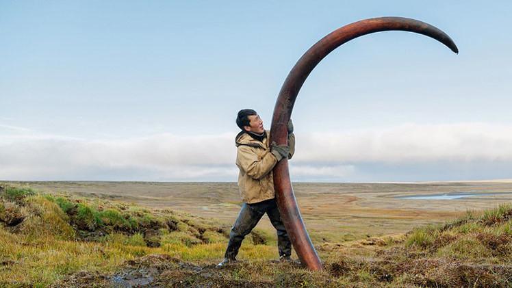 Proyecto de fotos único: cómo 'cazan' colmillos de mamut en Siberia