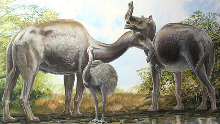 Resuelven el misterio de extraños mamíferos sudamericanos de Charles Darwin