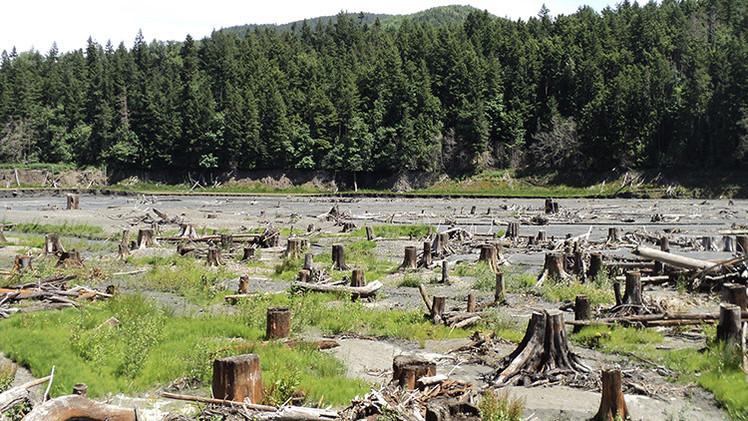 """'Science': """"Sólo quedan dos grandes trozos de bosque intacto en la Tierra"""""""