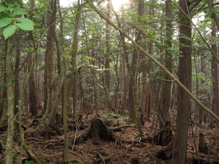 El bosque preferido por los suicidas