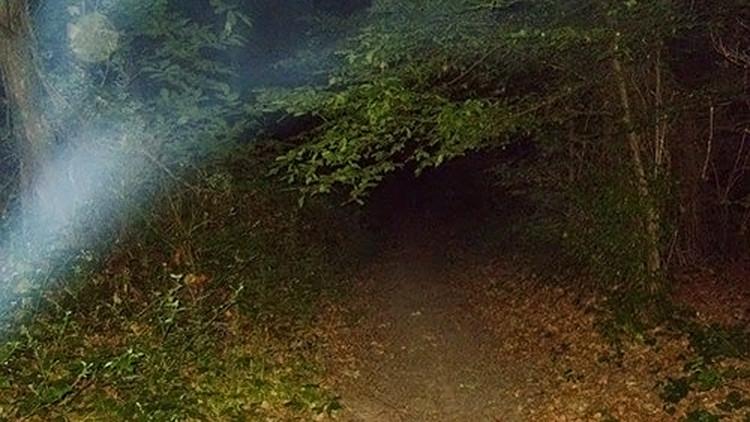 El bosque de fantasmas que gritan
