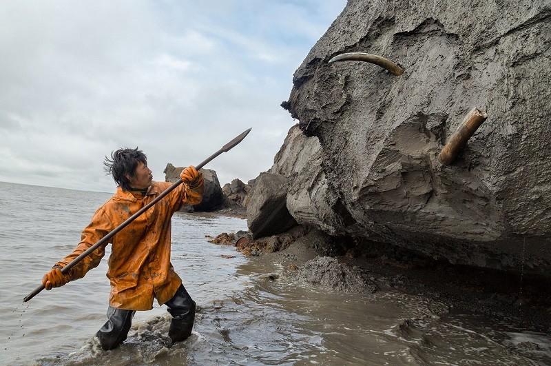 Desenterrando el pasado: cómo 'cazan' colmillos de mamut en Siberia
