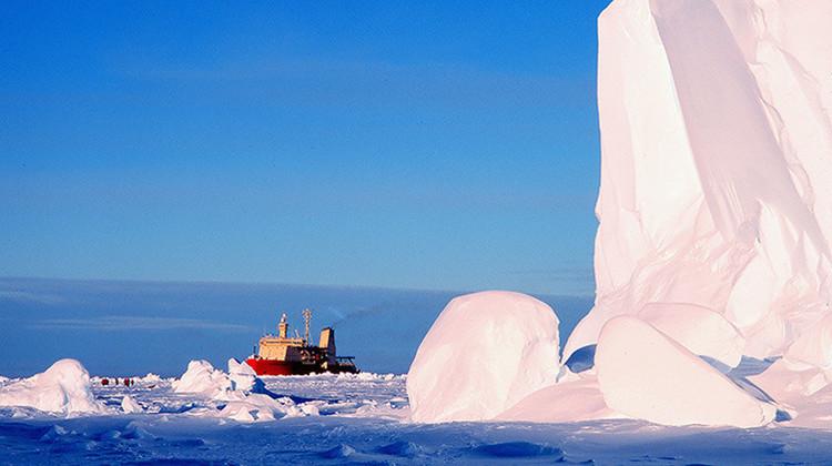 Video: Graban por primera vez la vida bajo el hielo de la Antártida