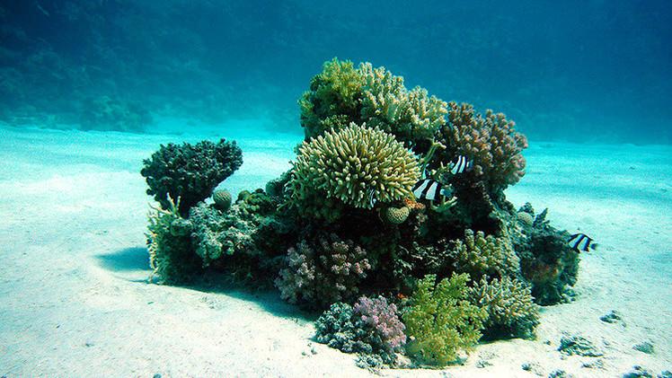 Las 'zonas muertas'  se extienden por el océano y amenazan a la fauna marina