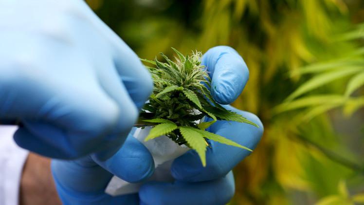 EE.UU. admite que la marihuana ayuda a tratar el cáncer de cerebro