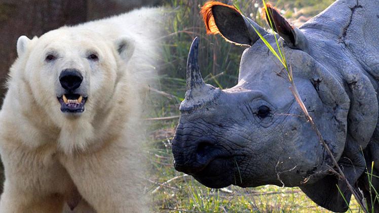 Mapamundi: ¿dónde hay más mamíferos amenazados?