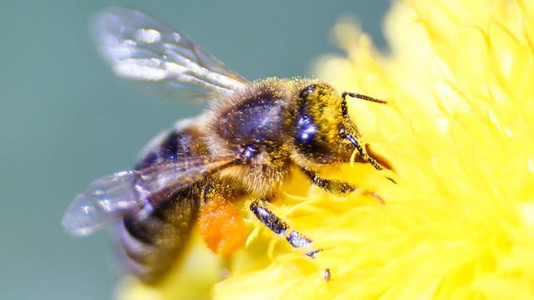 Plátanos, vino, abejas...: 10 recursos condenados a desaparecer