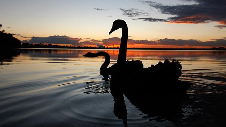 China libera un 'cisne negro': El mercado interbancario chino se inunda de liquidez