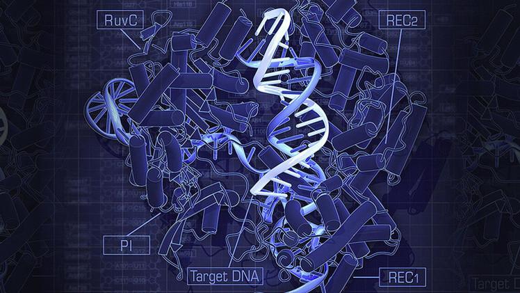 Hito científico en China: Logran por primera vez modificar el ADN de embriones humanos