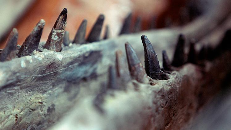 Bolivia bate el récord mundial al hallar más de 10.000 huellas de dinosaurios