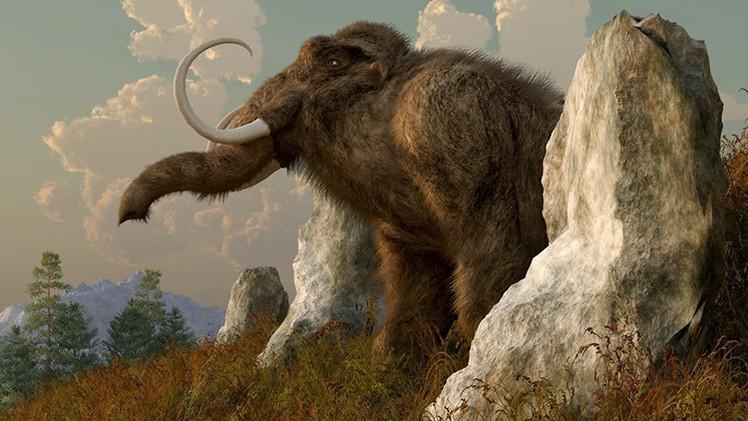 Descifran por primera vez en la historia el genoma del mamut
