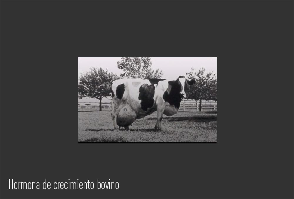 Hormona de crecimiento bovino