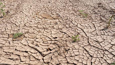 'Futuro sombrío': La crisis de agua causa hambre, guerras y terrorismo en el mundo
