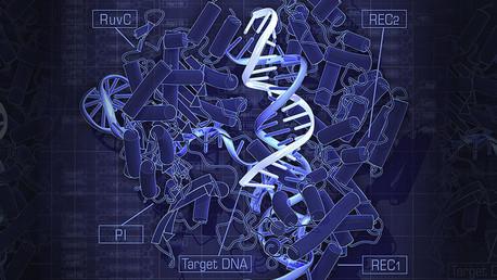 Científicos chinos modifican genéticamente los embriones humanos por primera vez en la historia