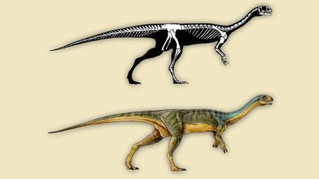 Un niño de 7 años descubre en Chile al primo vegetariano del tiranosaurio