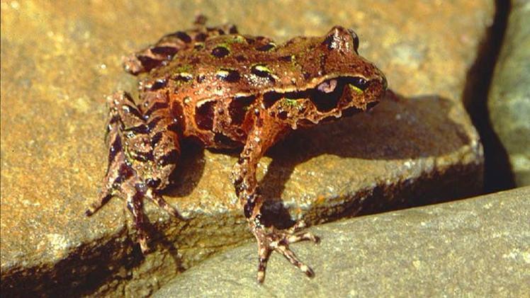 Estudio: Una de cada seis especies podría desaparecer debido al cambio climático