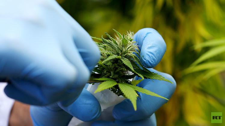El ejército italiano cultiva marihuana para que a los compradores les resulte más barata