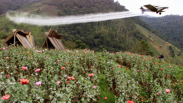 Giro en la guerra contra las drogas: Santos suspende el uso de glifosato en Colombia