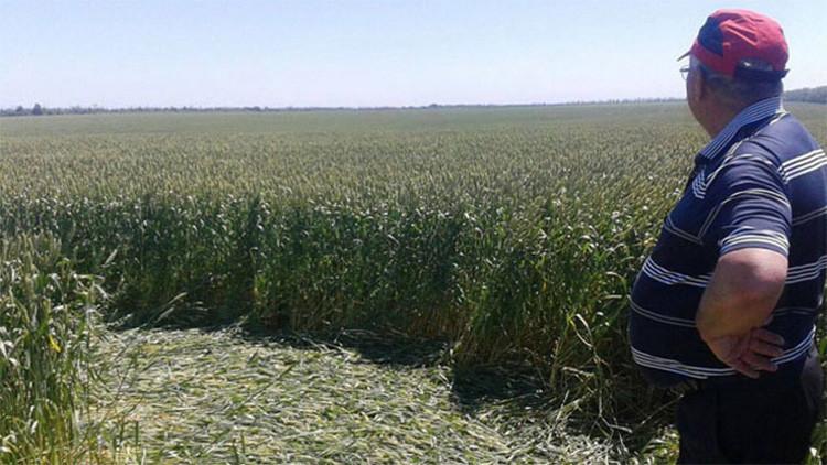 Fotos: Círculos de las cosechas aparecen en un campo en el sur de Rusia